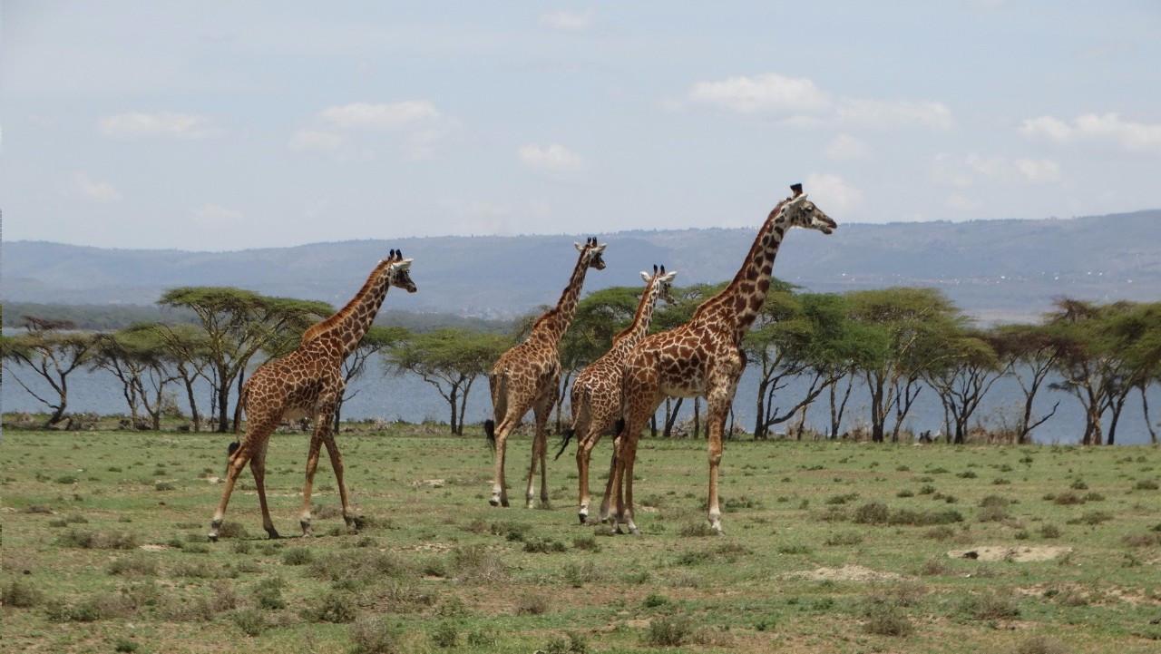 非洲故事的圖片搜尋結果