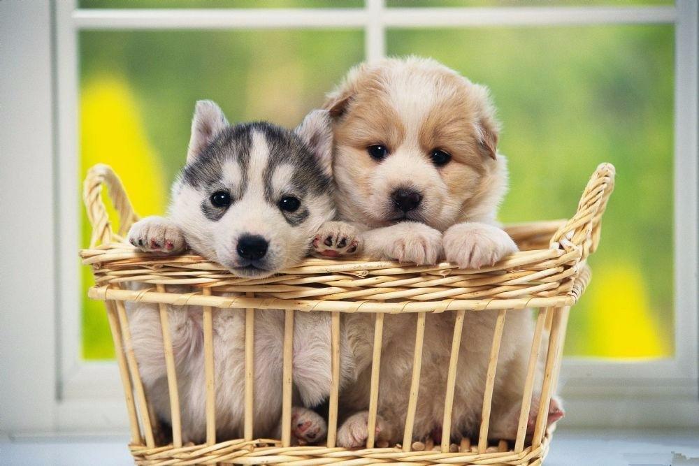可爱的小动物们在等你哟 1月6日 周六 NO.693期零基础油画活动 栩栩如生的生肖小动物 可爱的狗狗
