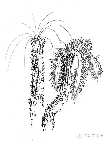 手绘微教程—— 景观棕榈篇 【微手绘15期】