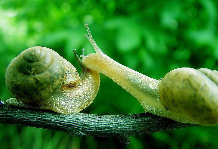 蜗牛黏液提取物有哪些功效,姬存希蜗牛系列护肤品成分是否天然