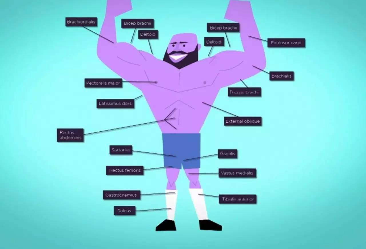 想增肌却不知道肌肉如何增长,估计你健身是靠蒙的....