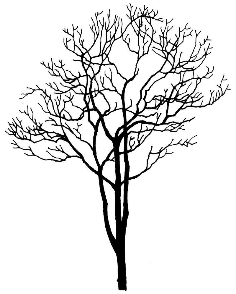 壁纸 简笔画 手绘 树 线稿 800_994 竖版 竖屏 手机