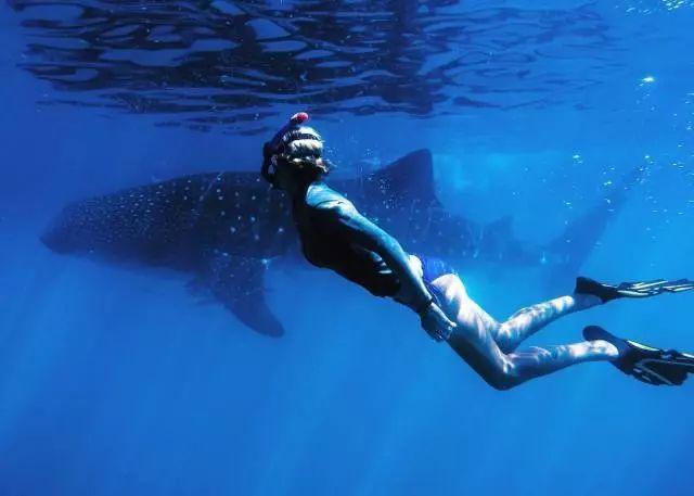 西澳5大必去潜点,老司机新潜客都会爱上图片