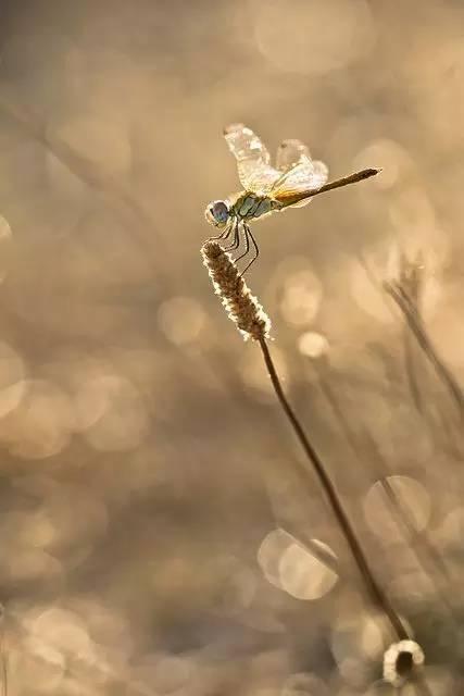 《尹和伯画蜻蜓》