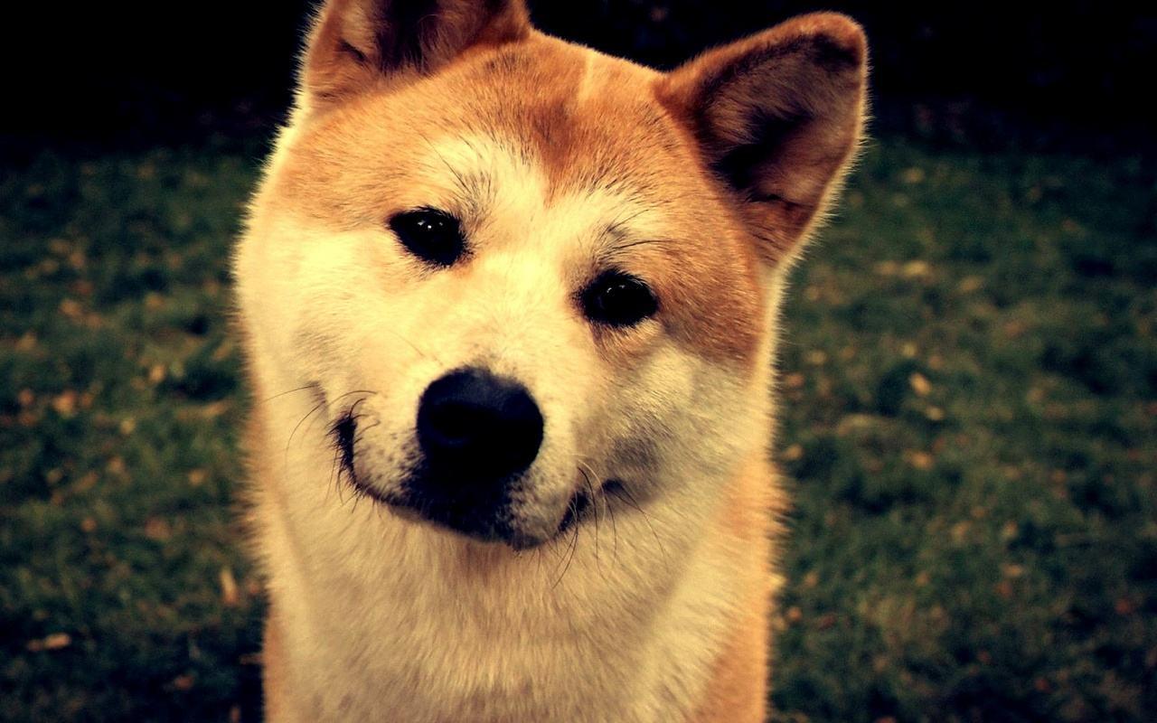 两部不同国家拍摄的关于狗的电影,让我们感受到狗与人的温情