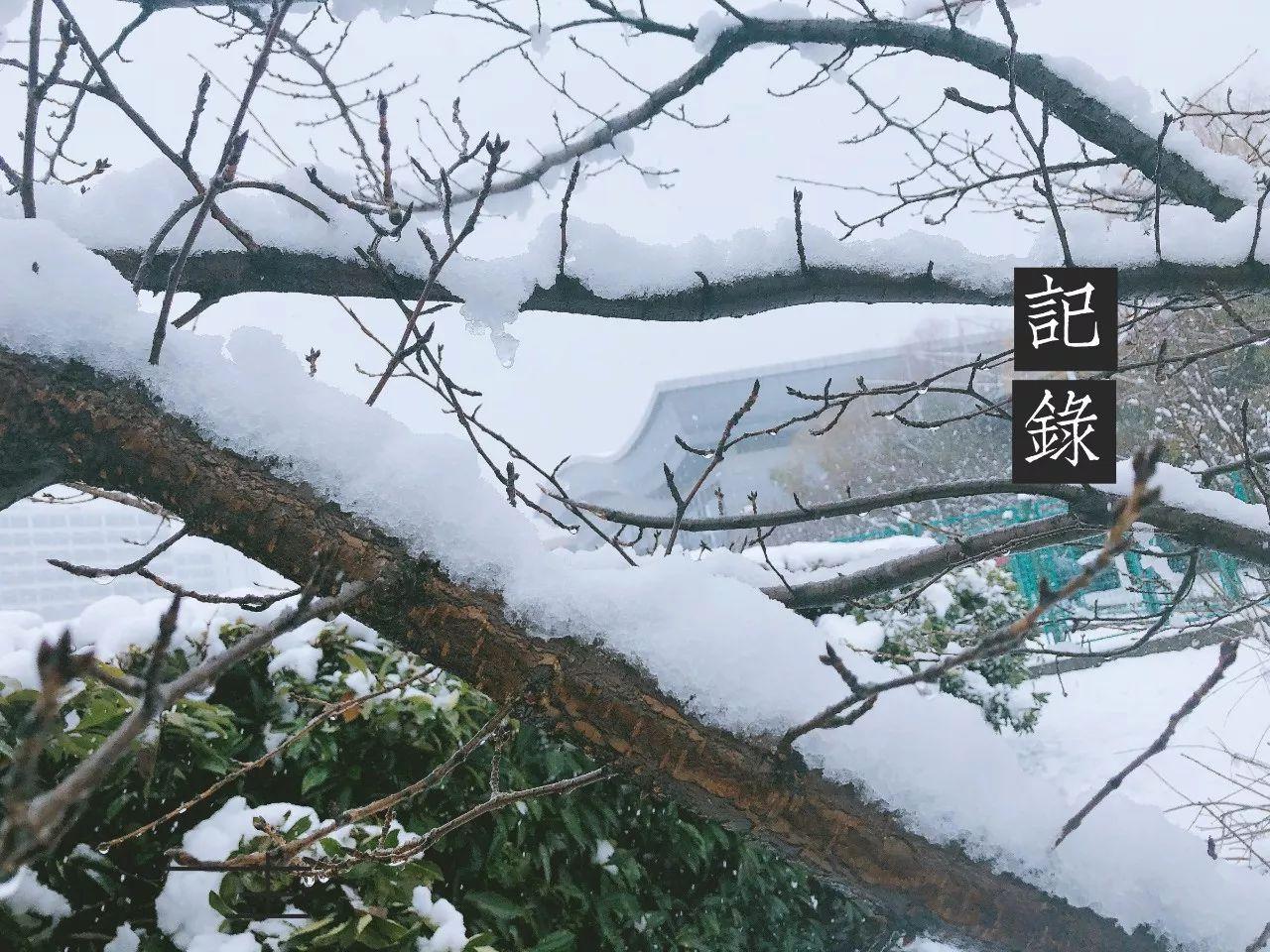 震惊!没有想到你竟然是这样的初雪!