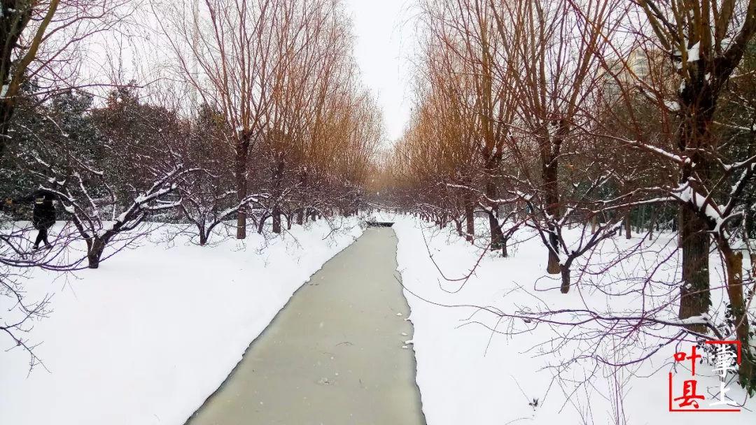 叶县暴雪已到达,最美的风景却是这些人!图片