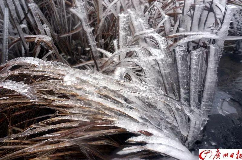 韶关已现冰挂 广州明起下雨 湿冷 攻击杀到