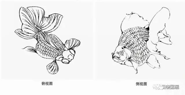 国画扇面金鱼画法图文教程,金鱼的画法技巧步骤,水草的画法
