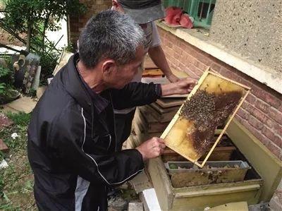 指导中蜂养殖关于蜜蜂的音乐图片