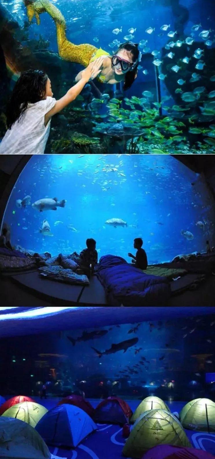 與百種海洋生物親密圖片
