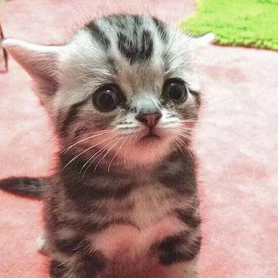 世界上最忧郁的表情包,卖个萌都委屈到想哭!图片