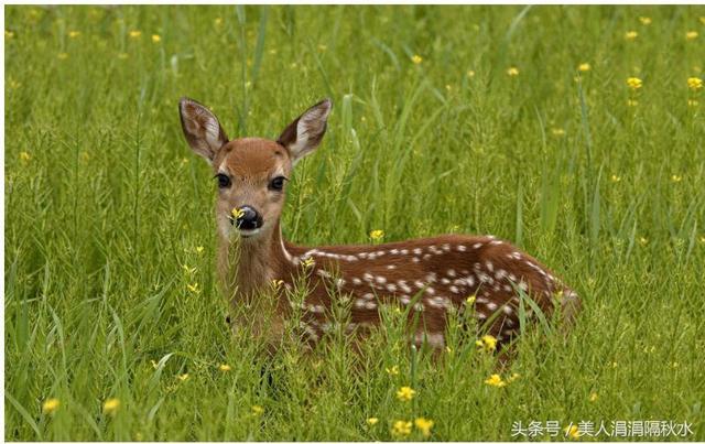 草裙社区人和动物性交_豹 豹子 壁纸 动物 桌面 640_403