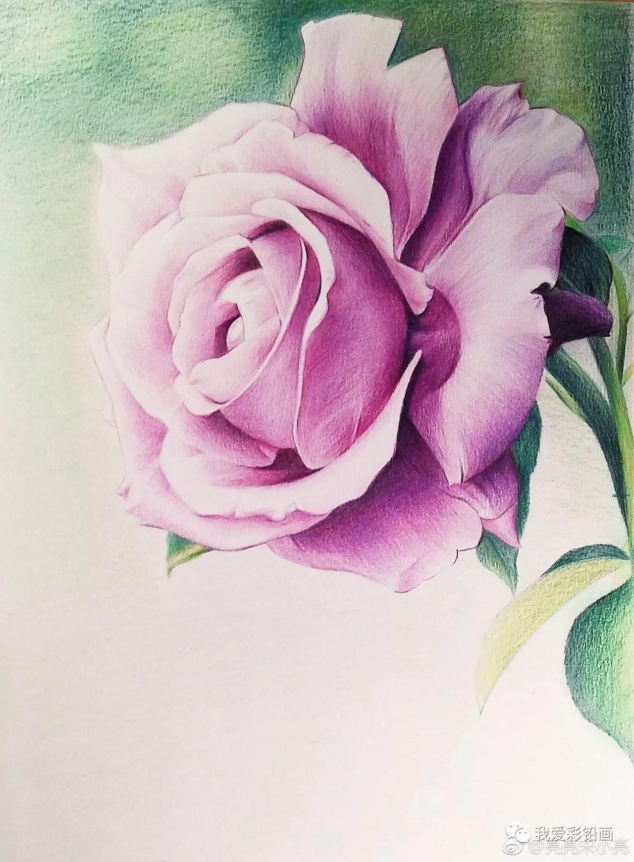 彩铅手绘--玫瑰花
