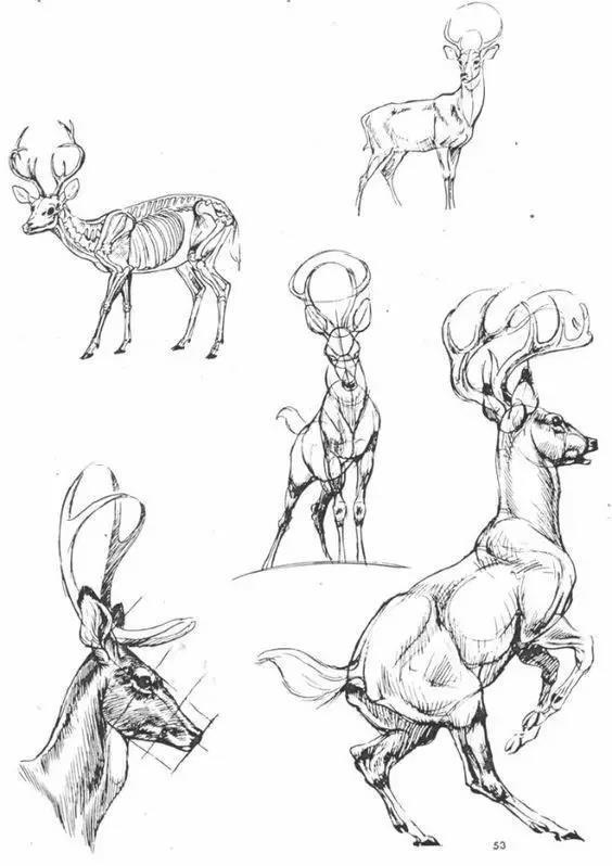 彩铅手绘鹿的全过程