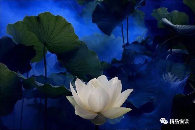 静悄悄的是一朵莲 张开白色的小脸 匍匐在你的胸前 我在佛前祈求了图片