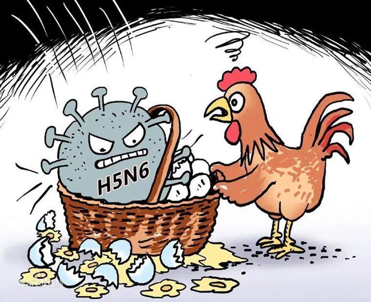 卫计委通报:福建确诊首例人感染H5N6流感病例