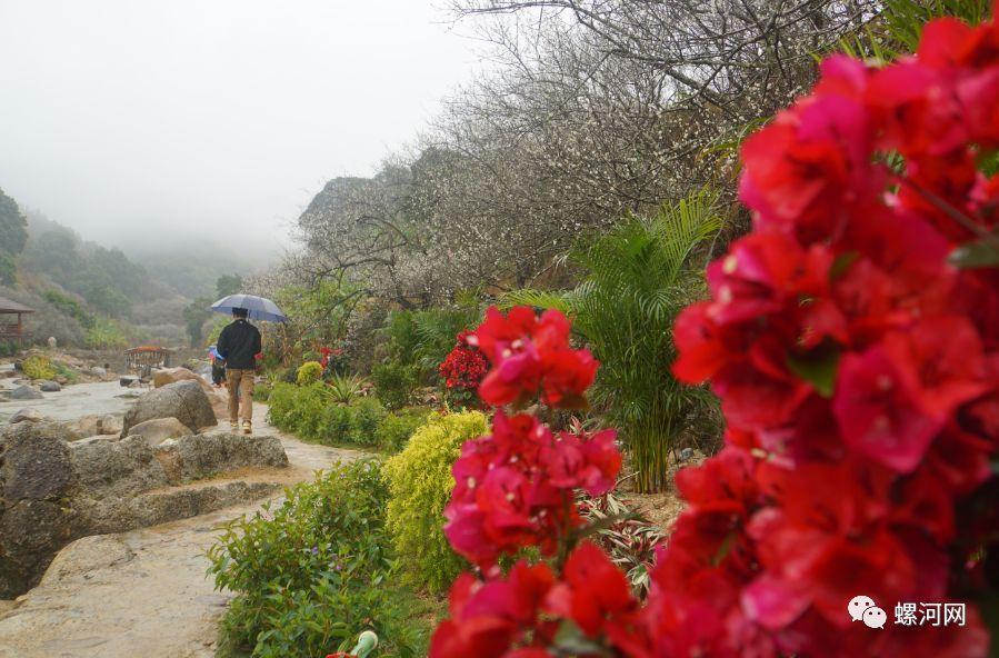 普宁梅园有哪些好玩的_全村种植青梅上万亩,是粤东地区最大的连片梅园之一.