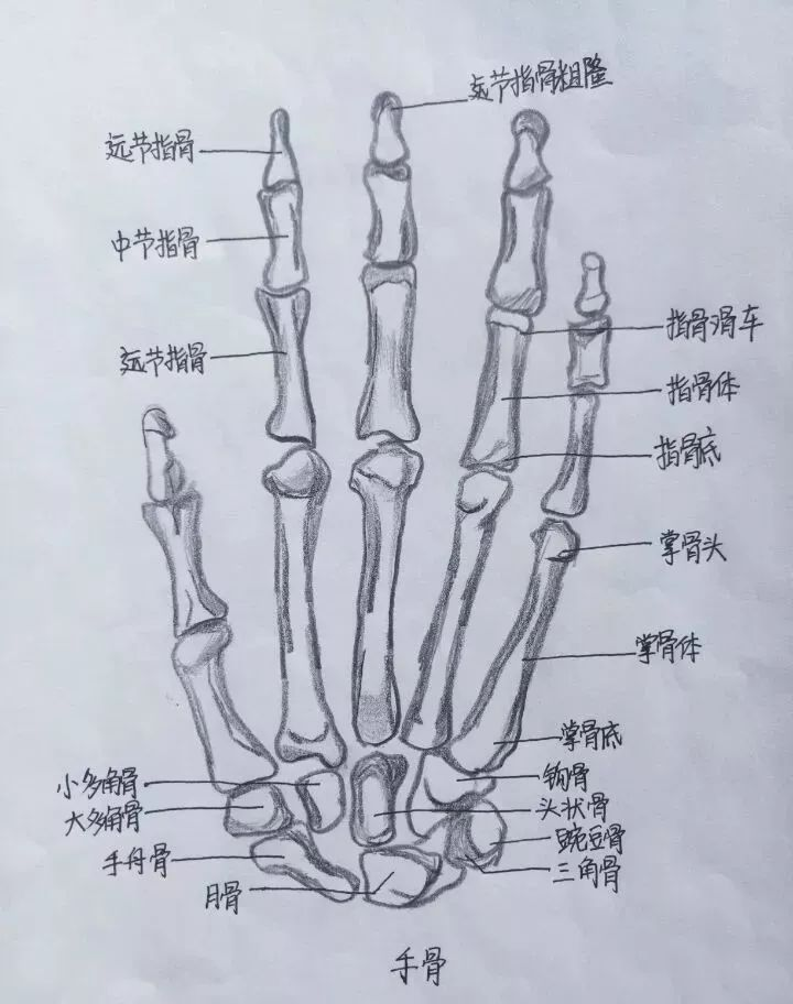 任性!医学生手绘解剖图谱