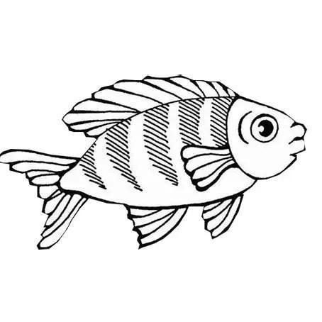 如何画小鱼简笔画图片,可可简笔画教小朋友学画小鱼的简笔画图片.