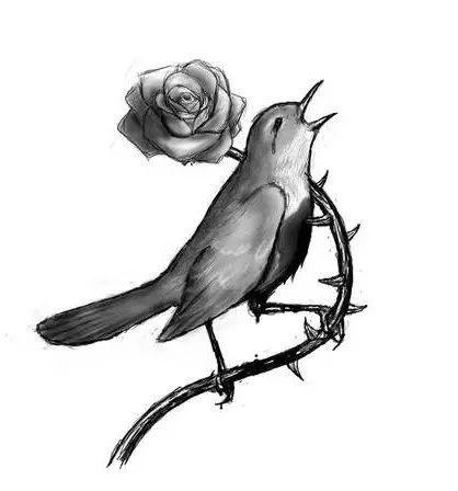 夜莺与玫瑰英文朗�_夜莺与玫瑰 | 这一切都比不上你的热吻那香液神奇的魔力, 它把我的