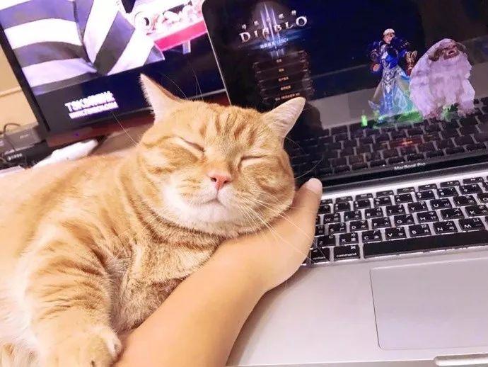 橘猫很困了, 但又舍不得离开主人,于是就.