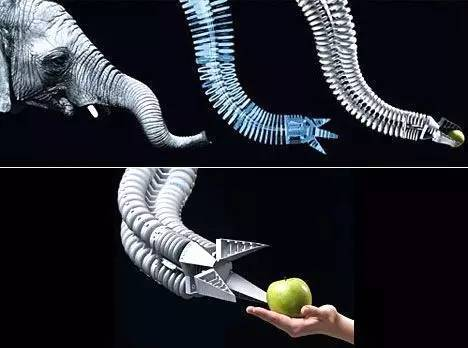 仿生设计:自然界的启示录!图片