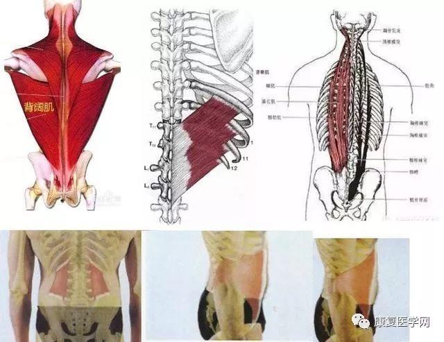 竖脊肌_收起99%干货!解决腰肌劳损,一块肌肉搞定!纯手法操作演示
