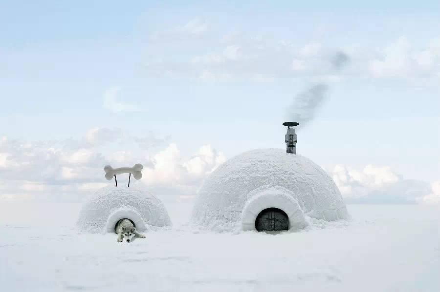 因纽特人的家庭成员之一,疼爱他们的因纽特家庭甚至会给它们建造雪屋图片