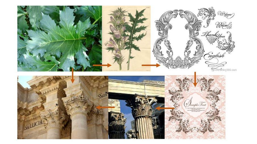 图为茛苕叶的演变(茛苕,音gèn sháo) 源于叙利亚大马士革城,当地