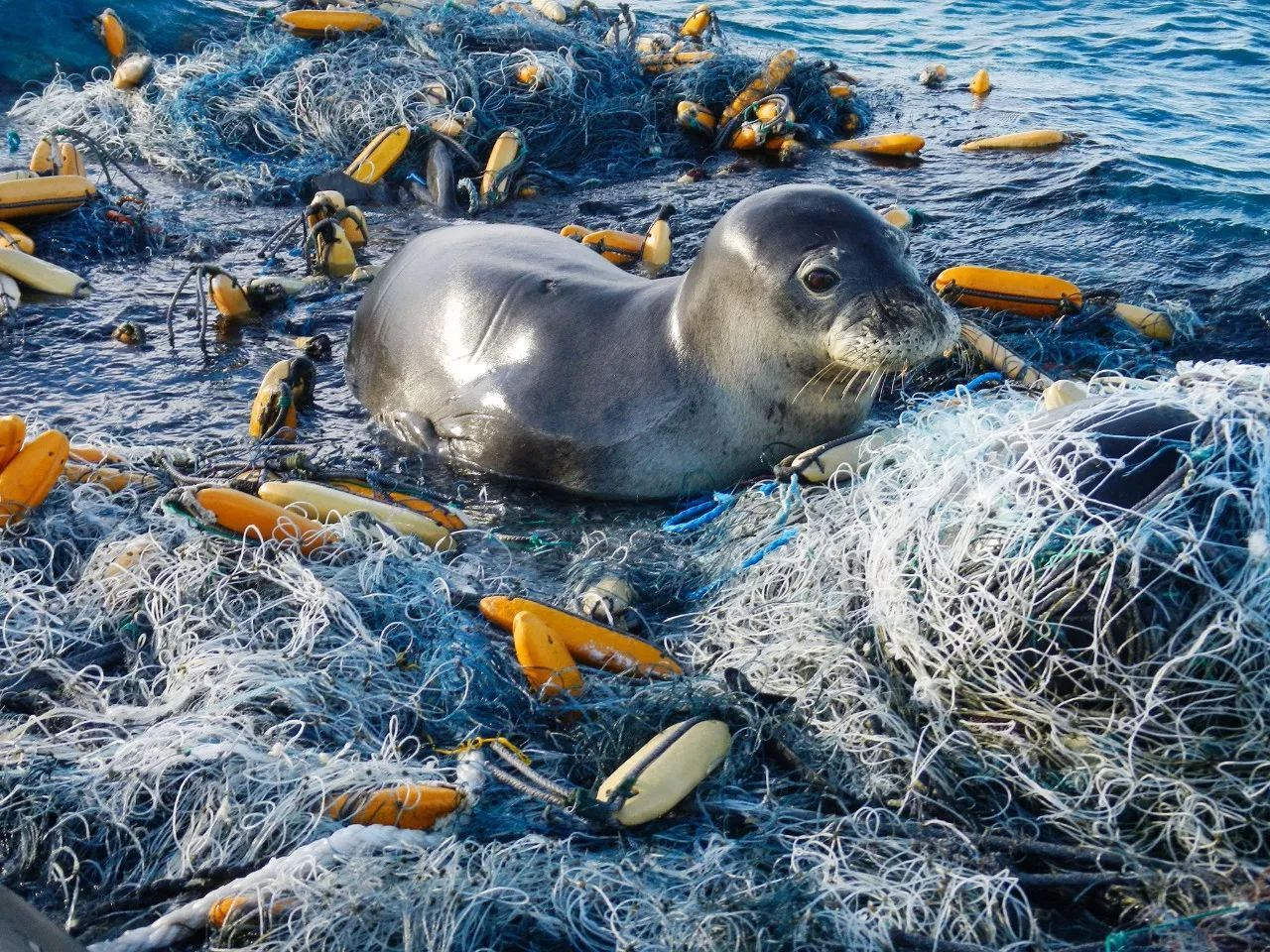 生活 正文  這不僅威脅海洋野生動植物的生存,還會破壞漁業和旅游業圖片