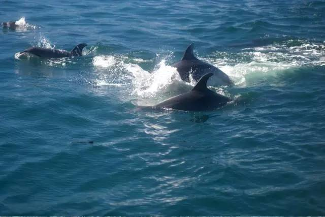 海豚手绘图片前任三