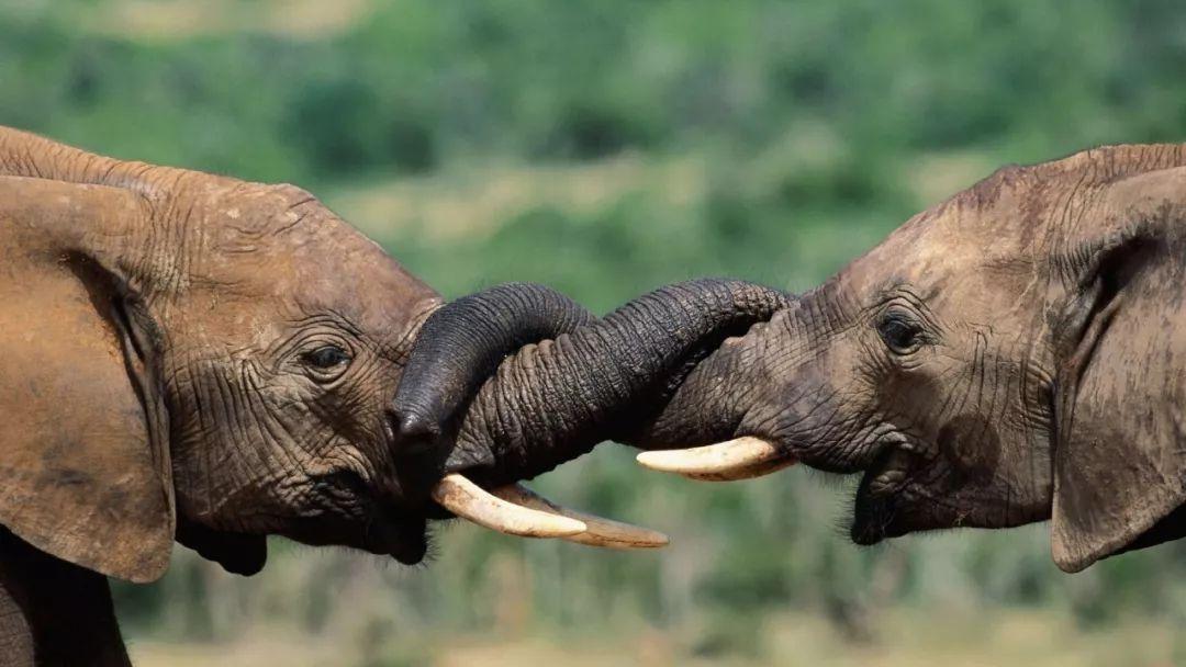 你好,我是大象!图片
