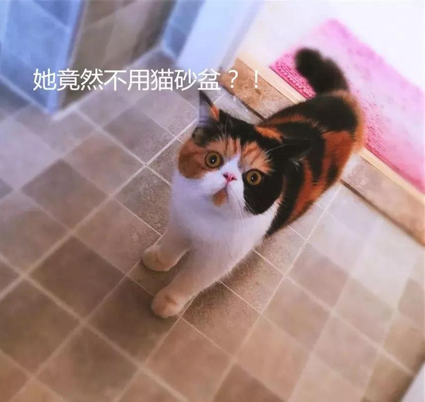 偷啪上厕所_我经常上厕所被监视!