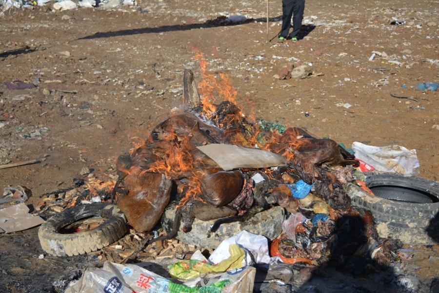 沧源县森林公安局公开销毁涉案野生动物及其制