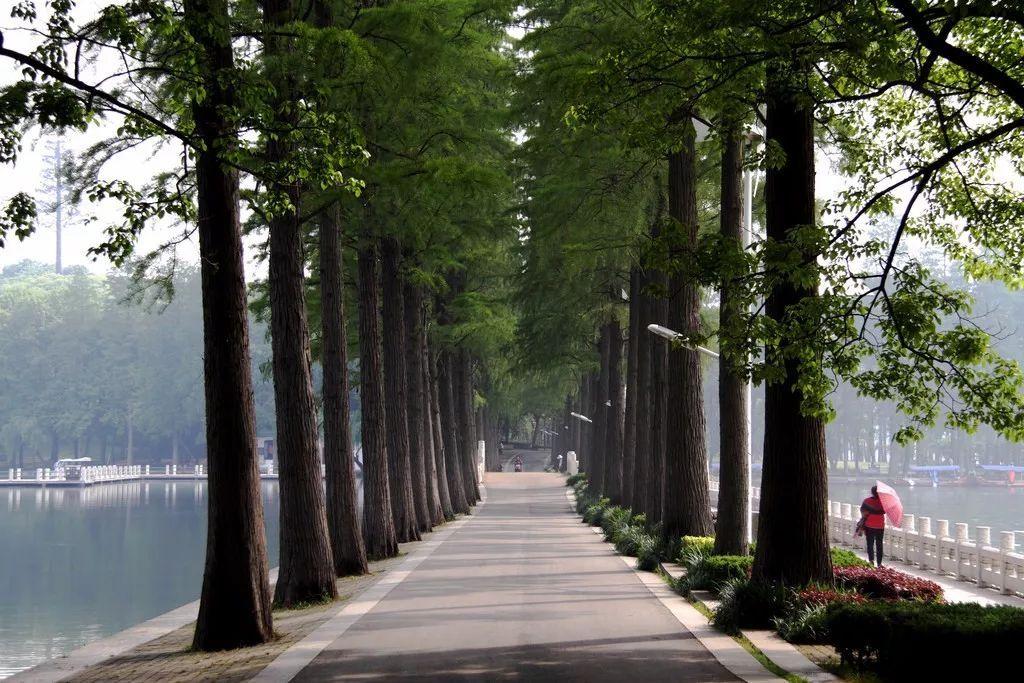 【配置要点】树阵植物的图片设计景观设计摩托车集锦图片