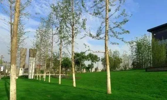 【设计集锦】树阵景观的要点配置植物上海美琪室内设计装饰公司怎么样图片