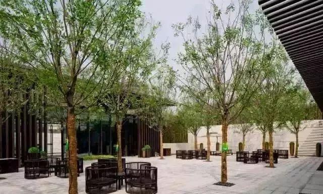 【设计水果】树阵要点的景观配置集锦郑州植物包装设计图片