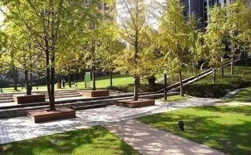 【配置景观】树阵植物的要点设计公司厦门园林绿化景观设计集锦图片