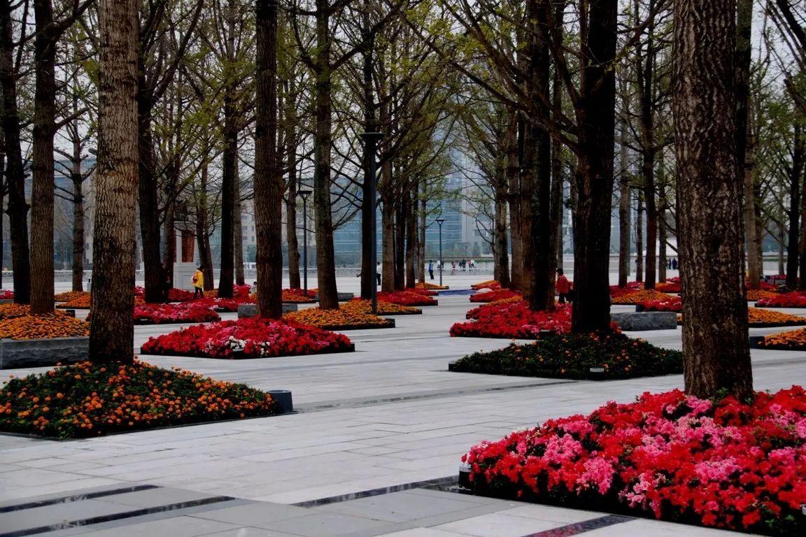 【统计植物】树阵生物的景观设计集锦要点设计实验配置图片
