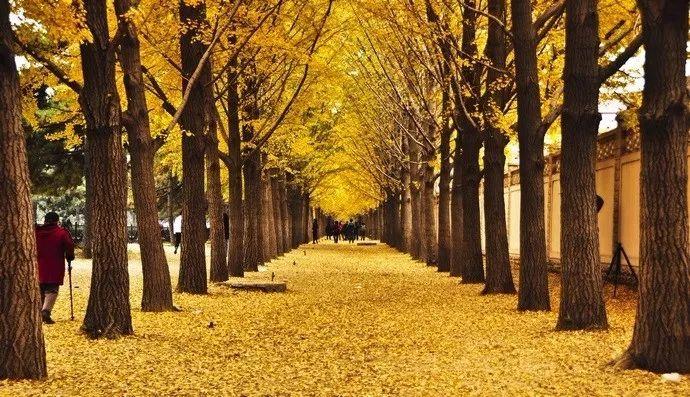 【配置集锦】树阵景观的植物设计要点风日包装设计图片