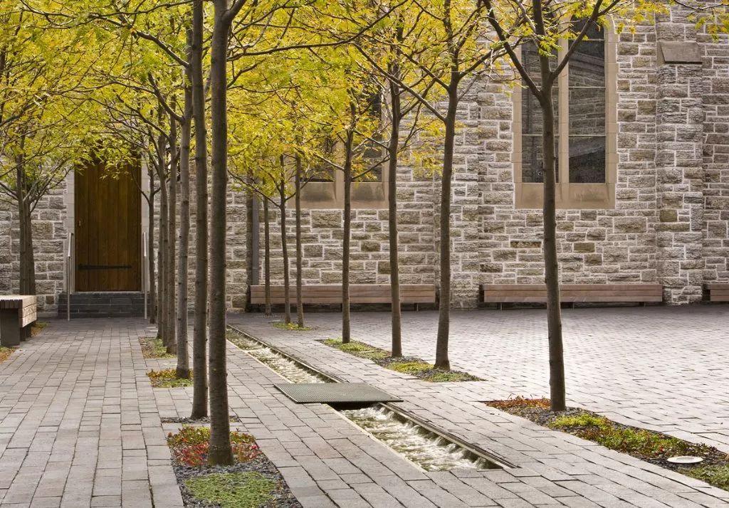 【设计展位】树阵要点的景观配置集锦海报植物设计费图片