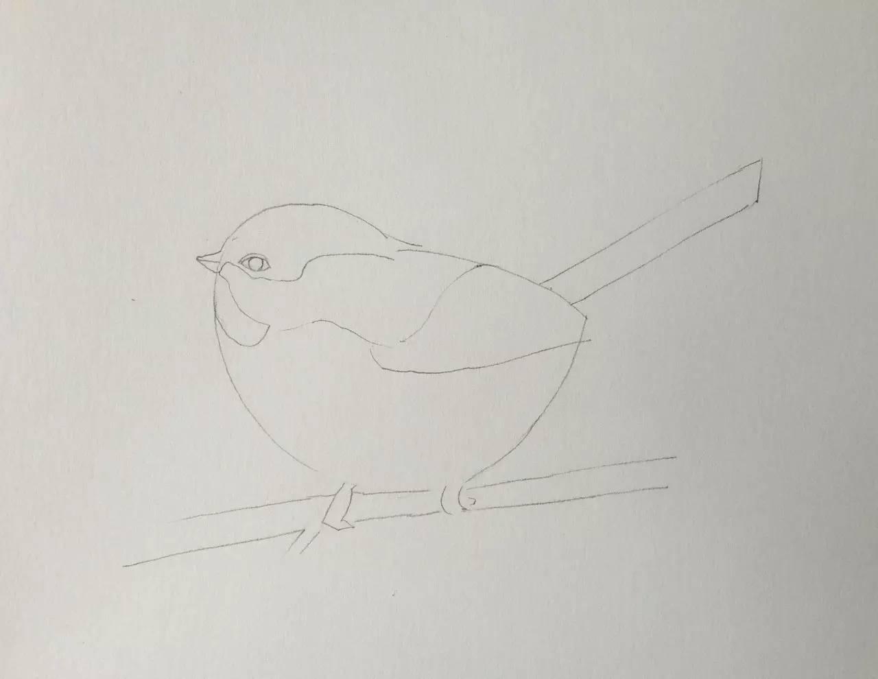 彩铅手绘羽毛一根