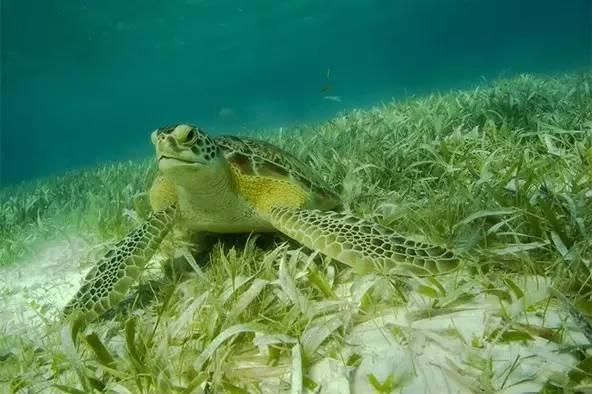 你知道吗?马尔代夫那细白沙滩,其实是鱼【便便】!