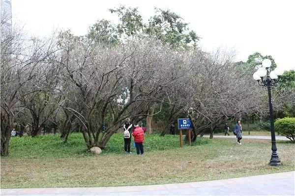温馨提示:中心公园,梅林公园,三洲田森林公园,马峦山郊野公园的图片