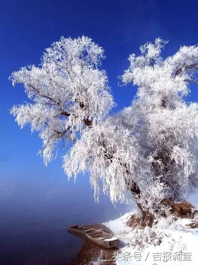 雾凇岛_吉林市雾凇岛火了!高居国内1月旅游最热景区第二位!