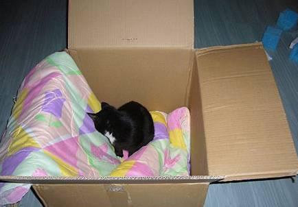 纸箱手工制作猫窝