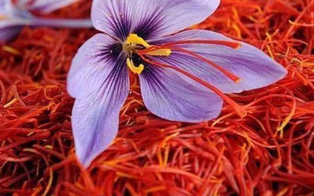 藏红花的功效_藏红花主要有哪些功效?