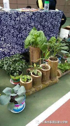 教育 正文  本次科技节以steam课程《蔬菜盆栽园艺化》为基础,在盆栽图片