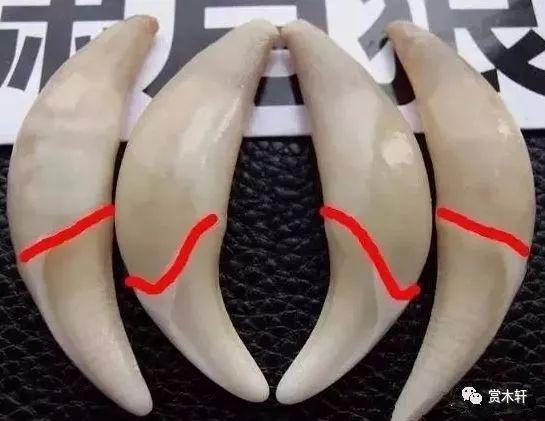 狼牙与狗牙的区别,你都知道吗